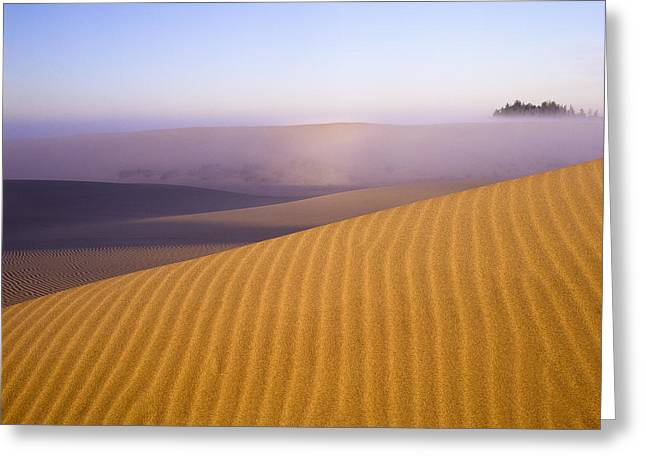 Oregon Dunes National Recreation Area Greeting Cards - Rippled Sand Dune Greeting Card by Robert Potts
