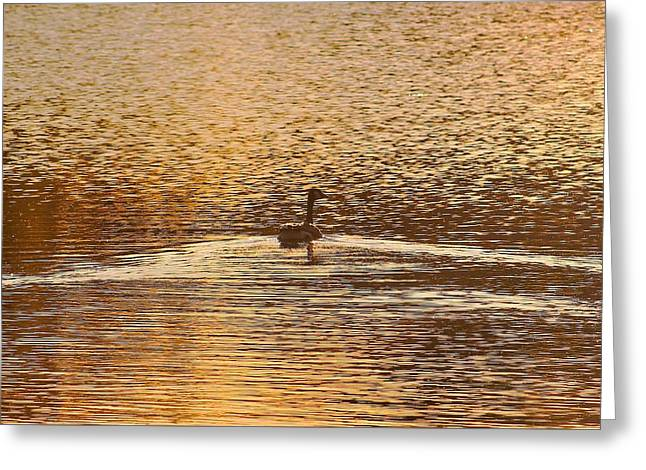 Sunset Abstract Greeting Cards - Copper  Greeting Card by Karl Anderson