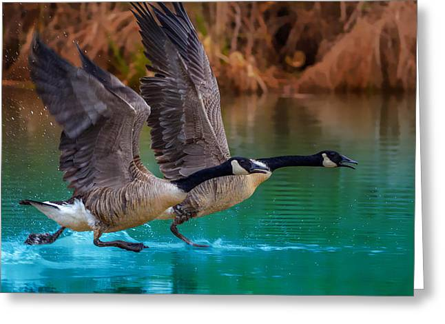 Aquatic Greeting Cards - Rise Of Flight Greeting Card by Brian Stevens