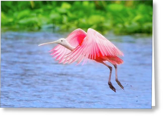 Rise Of The Spoonbill Greeting Card by Mark Andrew Thomas