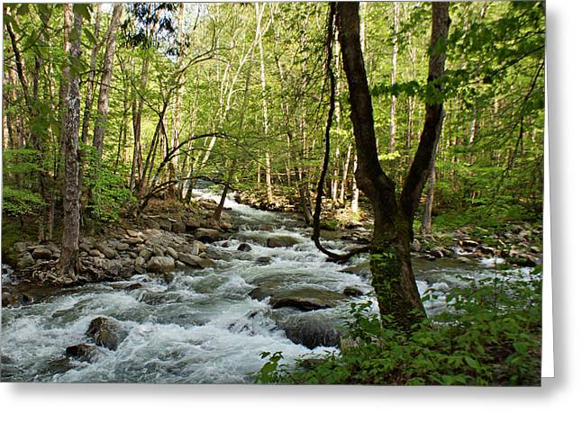 River At Greenbrier Greeting Card by Sandy Keeton