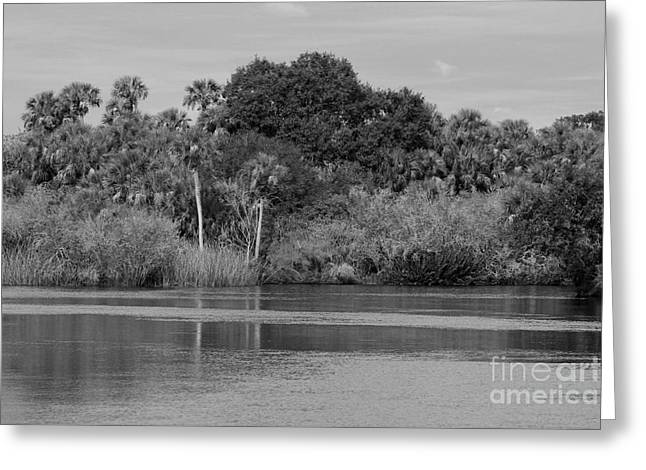 Reflections In River Greeting Cards - River Bank Greeting Card by Robert Wilder Jr