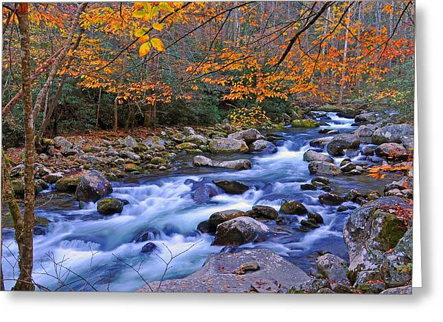 Stream Greeting Cards - River Birch Overhangs Big Creek Greeting Card by Alan Lenk