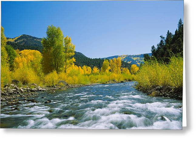 Riverbed Greeting Cards - River Flowing In The Forest, San Miguel Greeting Card by Panoramic Images