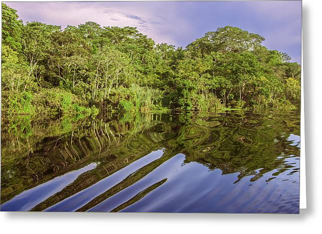 Mangrove Forest Greeting Cards - River in the Amazon Rainforest Peru Greeting Card by Eduardo Huelin
