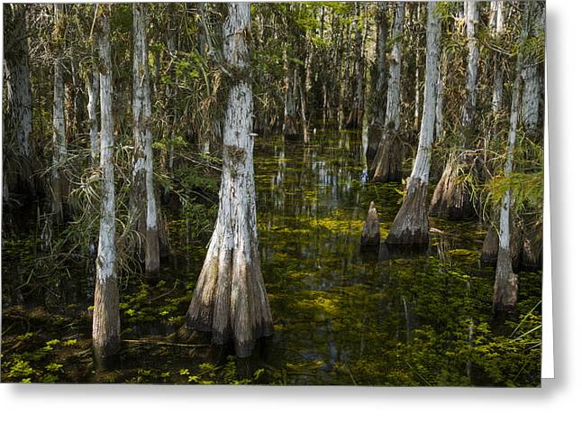 Aquatic Greeting Cards - River Of Trees 2 Greeting Card by Robert Grauer