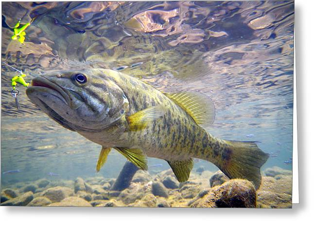 Wade Fishing Greeting Cards - River Smallmouth Greeting Card by Ron Kruger