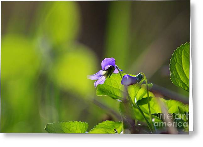 Wildflower Photograph Greeting Cards - River Wildflowers  Greeting Card by Neal  Eslinger