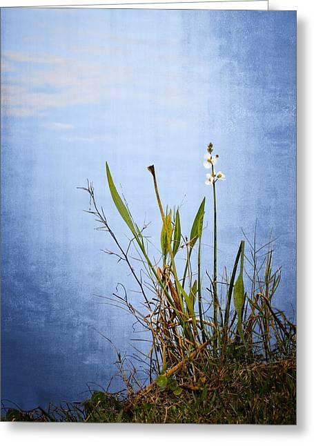 Fall Grass Greeting Cards - Riverbank Beauty Greeting Card by Carolyn Marshall