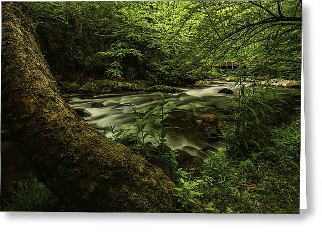 Fishing Creek Greeting Cards - Riverbend at Hazel Creek Greeting Card by Joel Corley