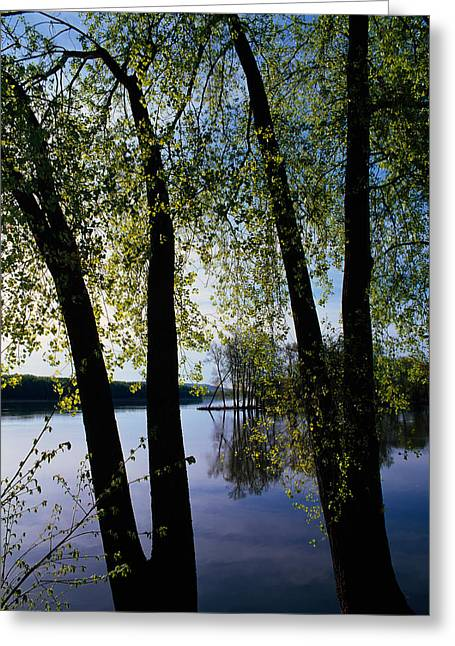 Mississippi River Scene Greeting Cards - Riverview Through Budding Trees Greeting Card by Panoramic Images