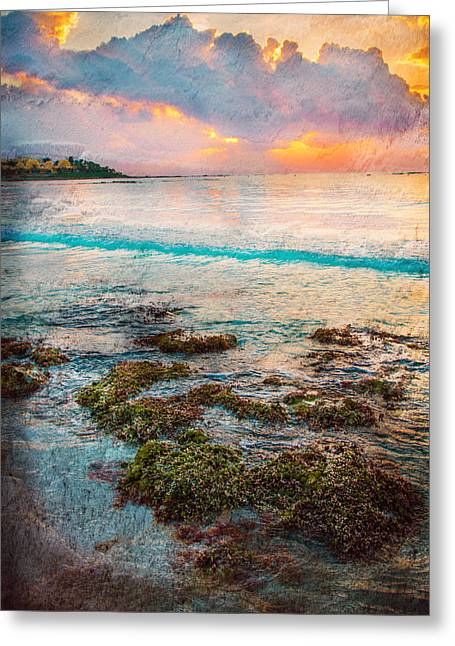 Algae Greeting Cards - Riviera Maya Greeting Card by Sonia Conforti