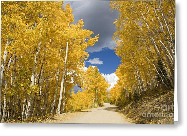 Steamboat Springs Western Greeting Cards - Road Amid Aspens 1 Greeting Card by Ron Dahlquist - Printscapes