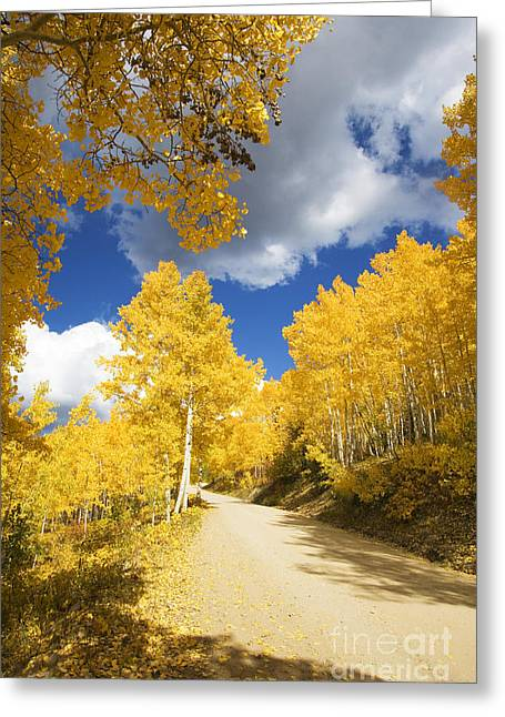Steamboat Springs Western Greeting Cards - Road Amid Aspens 2 Greeting Card by Ron Dahlquist - Printscapes