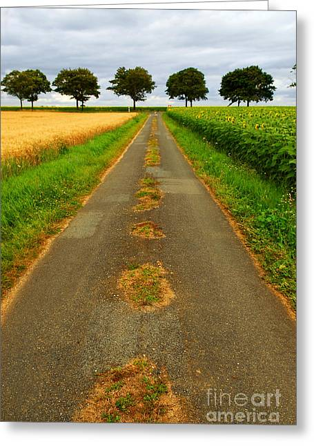 Cultivated Greeting Cards - Road in rural France Greeting Card by Elena Elisseeva