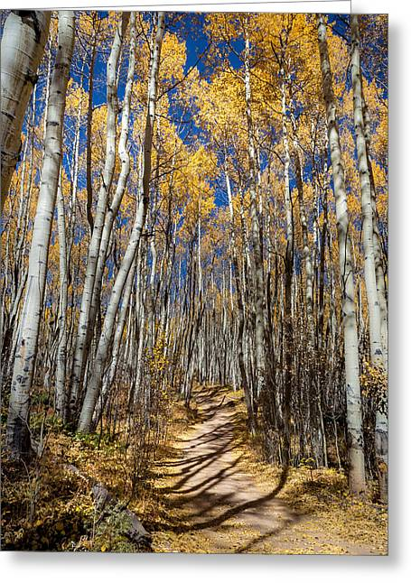Road Through Aspens Greeting Card by Michael J Bauer