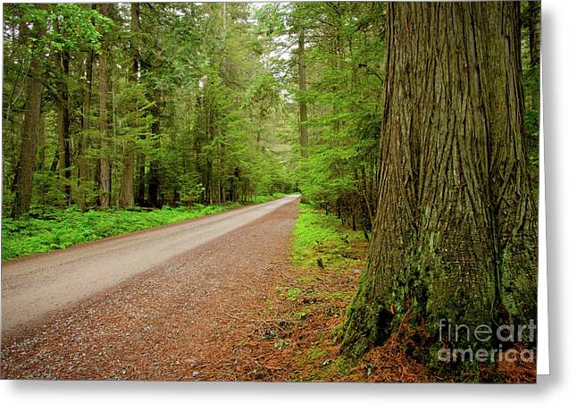 Big Sky Country Greeting Cards - Road through the Cedars Greeting Card by Idaho Scenic Images Linda Lantzy