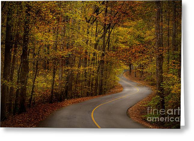Oak Creek Greeting Cards - Road through Tishomingo State Park Greeting Card by T Lowry Wilson