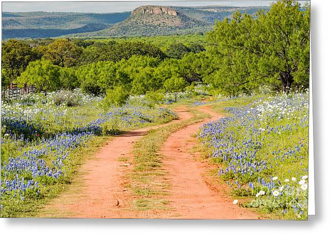 Meadow Willows Greeting Cards - Road to Bluebonnet Heaven - Willow City Loop Texas Hill Country Llano Fredericksburg Greeting Card by Silvio Ligutti