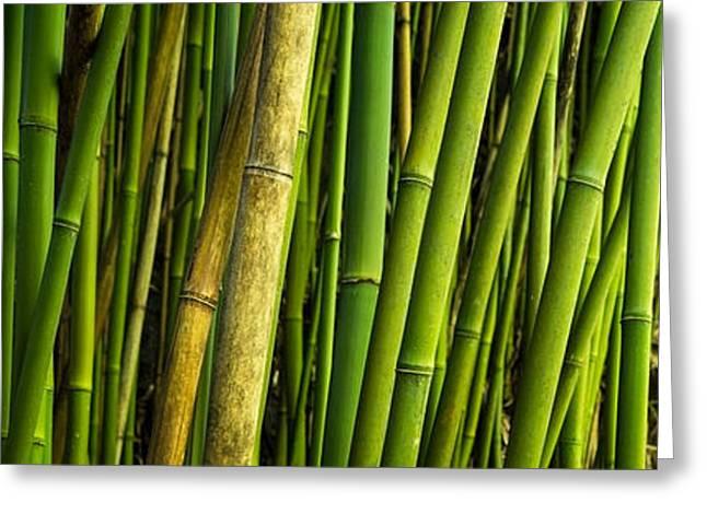 Road To Hana Bamboo Panorama - Maui Hawaii Greeting Card by Brian Harig