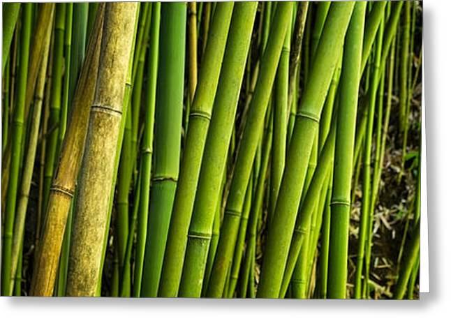 Road Picture Greeting Cards - Road To Hana Bamboo Panorama - Maui Hawaii Greeting Card by Brian Harig