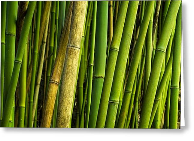 Brian Harig Greeting Cards - Road To Hana Bamboo Panorama - Maui Hawaii Greeting Card by Brian Harig