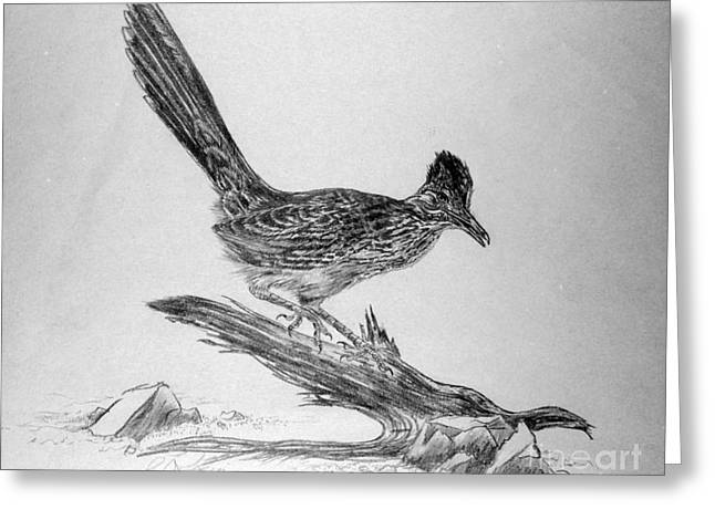 Roadrunner Greeting Card by Roy Anthony Kaelin