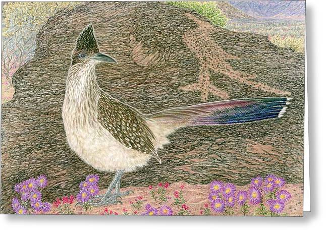 Sandia Drawings Greeting Cards - Roadrunner Greeting Card by Tim McCarthy