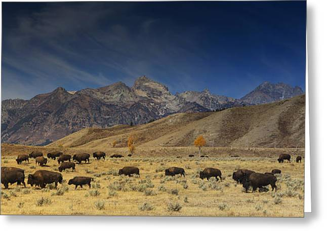 Roaming Bison Greeting Card by Mark Kiver