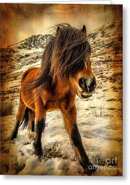 National Digital Art Greeting Cards - Roaming Free Greeting Card by Adrian Evans