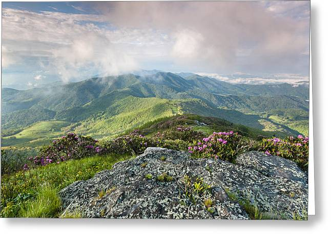 Western North Carolina Greeting Cards - Roan Highlands - Grassy Ridge Rhododendron Greeting Card by Mark VanDyke