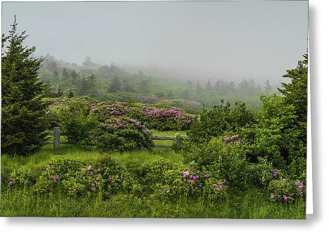 Southern Appalachians Greeting Cards - Roan Mountain Spring Greeting Card by Johan Hakansson