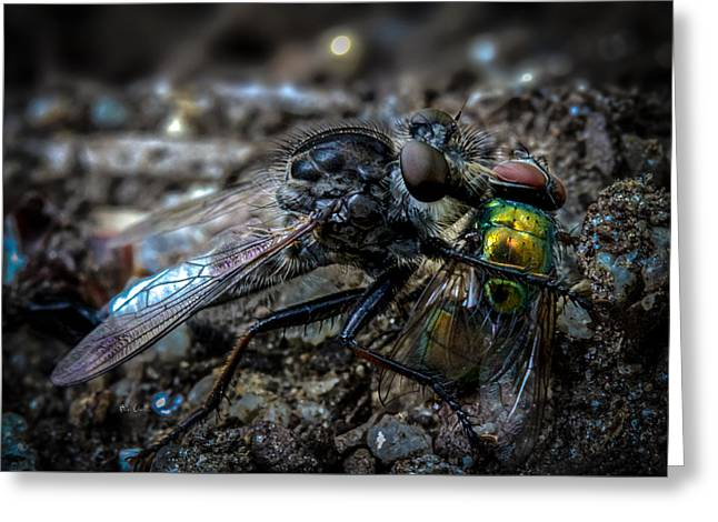 Biology Greeting Cards - Robber Fly Eating Green Bottle Fly Greeting Card by Bob Orsillo