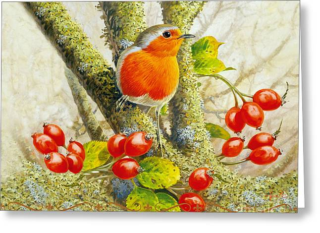 Birdwatching Greeting Cards - Robin Autumn Greeting Card by John Francis