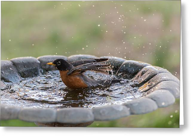 Book Cover Art Greeting Cards - Robin In Bird Bath New Jersey  Greeting Card by Terry DeLuco