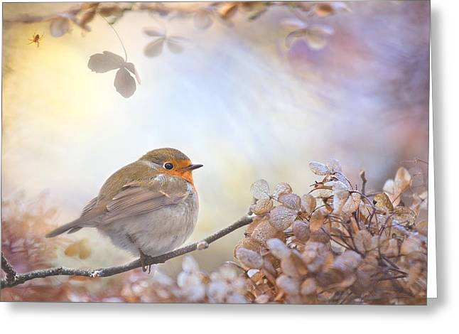 Robin Greeting Cards - Robin On Dreams Greeting Card by Teuni