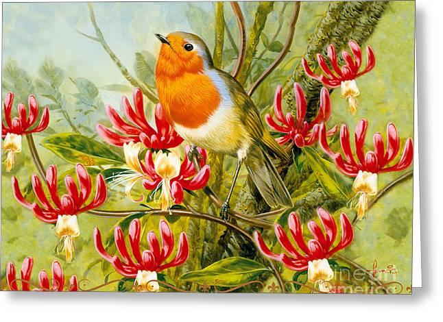 Birdwatching Greeting Cards - Robin Summer Greeting Card by John Francis