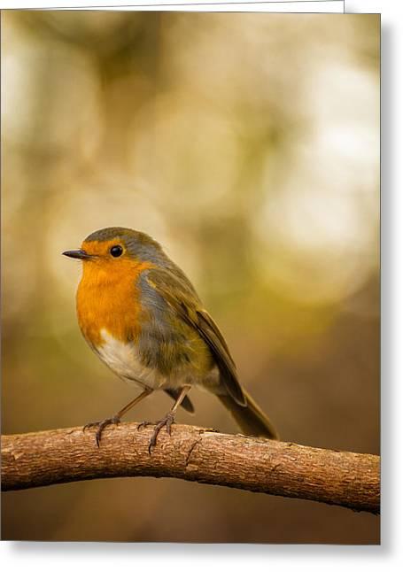 Robin - Wast Water, Lake District, Uk. Greeting Card by Daniel Kay