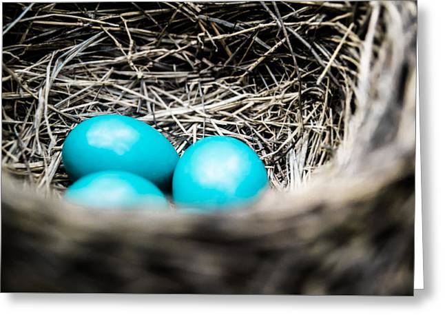 Bird Photographs Greeting Cards - Robins Eggs Greeting Card by Shelby  Young