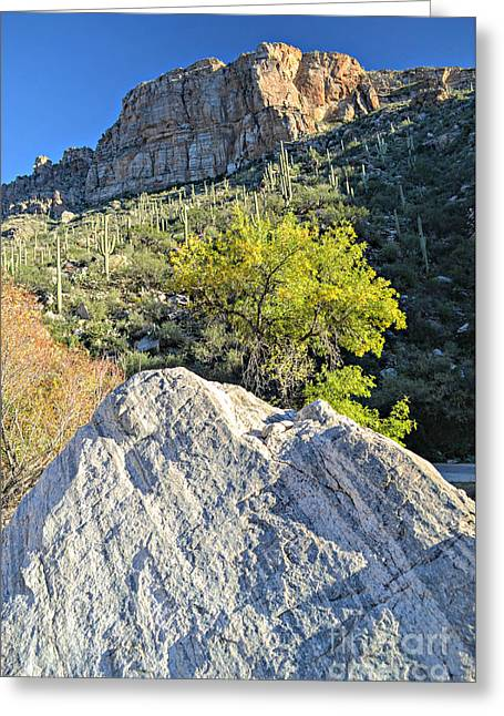 Rock At Sabino Canyon Greeting Card by Rincon Road Photography By Ben Petersen