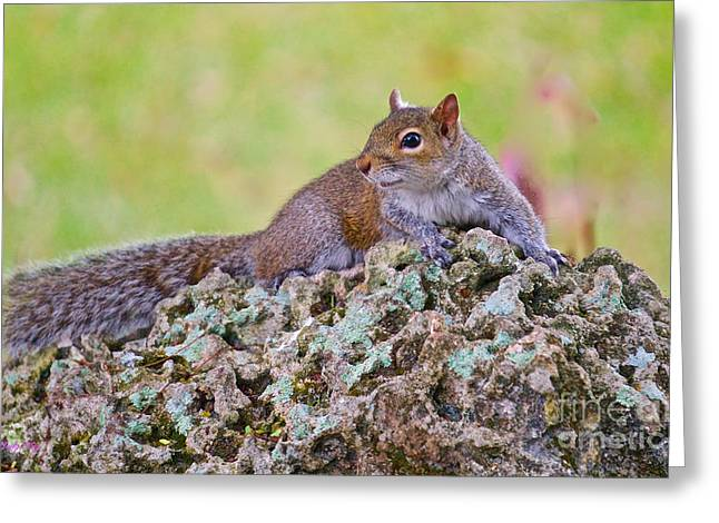 Wild Animals Greeting Cards - Rock Beauty Greeting Card by Judy Kay