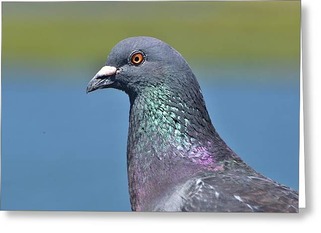 California Beaches Greeting Cards - Rock Dove I Greeting Card by Linda Brody