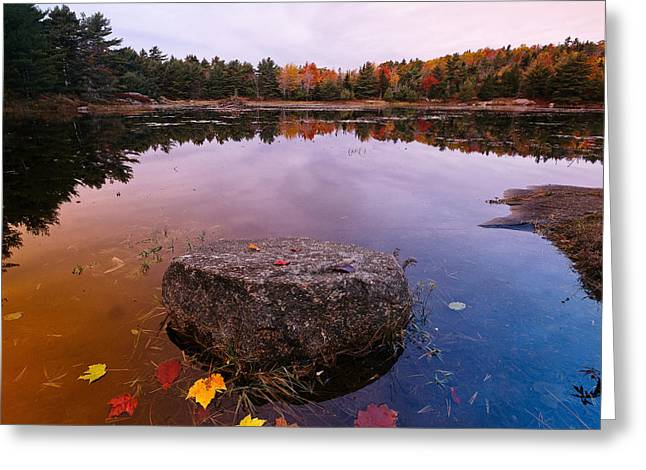 Rock In A Pond Acadia Natioanl Park Maine Greeting Card by George Oze