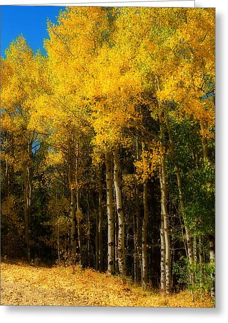 Striking Images Greeting Cards - Rocky Mountain Aspen Color Greeting Card by James BO  Insogna