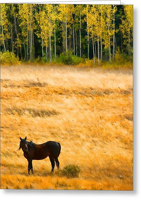 Rocky Mountain Autumn Graze Greeting Card by James BO  Insogna