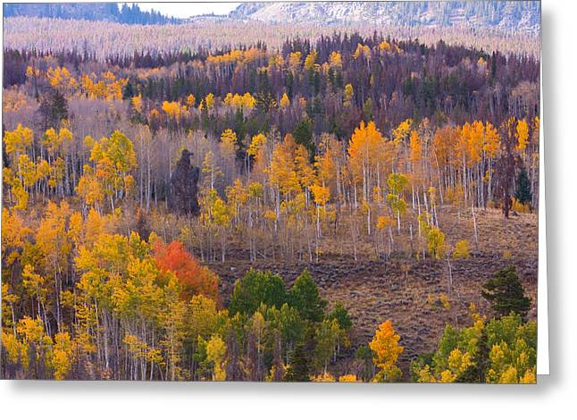 Striking Images Greeting Cards - Rocky Mountain Autumn View Greeting Card by James BO  Insogna