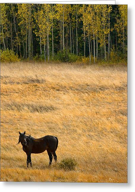 Striking Images Greeting Cards - Rocky Mountain High Country Autumn Graze Greeting Card by James BO  Insogna