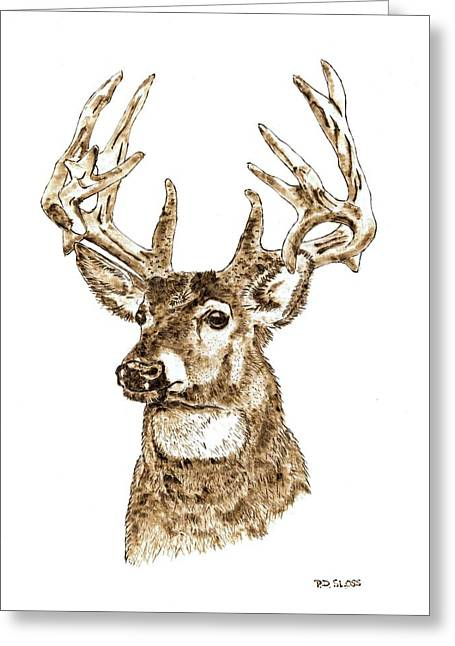 Hunting Pyrography Greeting Cards - Rocky Mountain Mule Deer Greeting Card by Pat Sloss