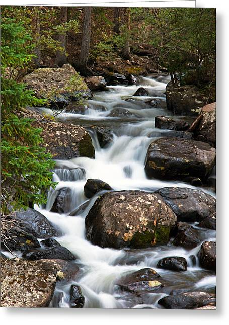 Forest Creek Greeting Cards - Rocky Mountain National Park Cascade  Greeting Card by The Forests Edge Photography - Diane Sandoval