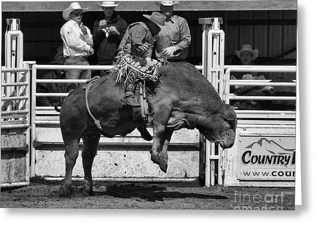 Bull Riding Greeting Cards - Rodeo Bull Riding 4 Greeting Card by Bob Christopher